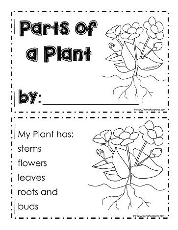 Coloring page parts of a book murderthestout for Parts of a plant coloring page