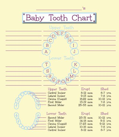 Baby Teeth Chart  Baby Tooth Chart  Home    Tooth