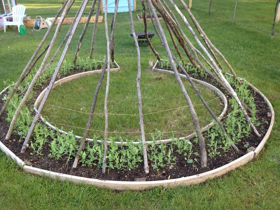 Great idea stolen from Dan Smith for growing beans. Plus