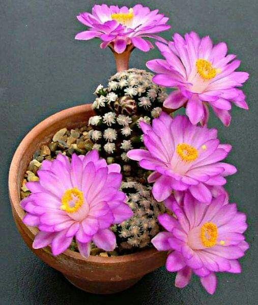 How Often To Water Cactus Indoors