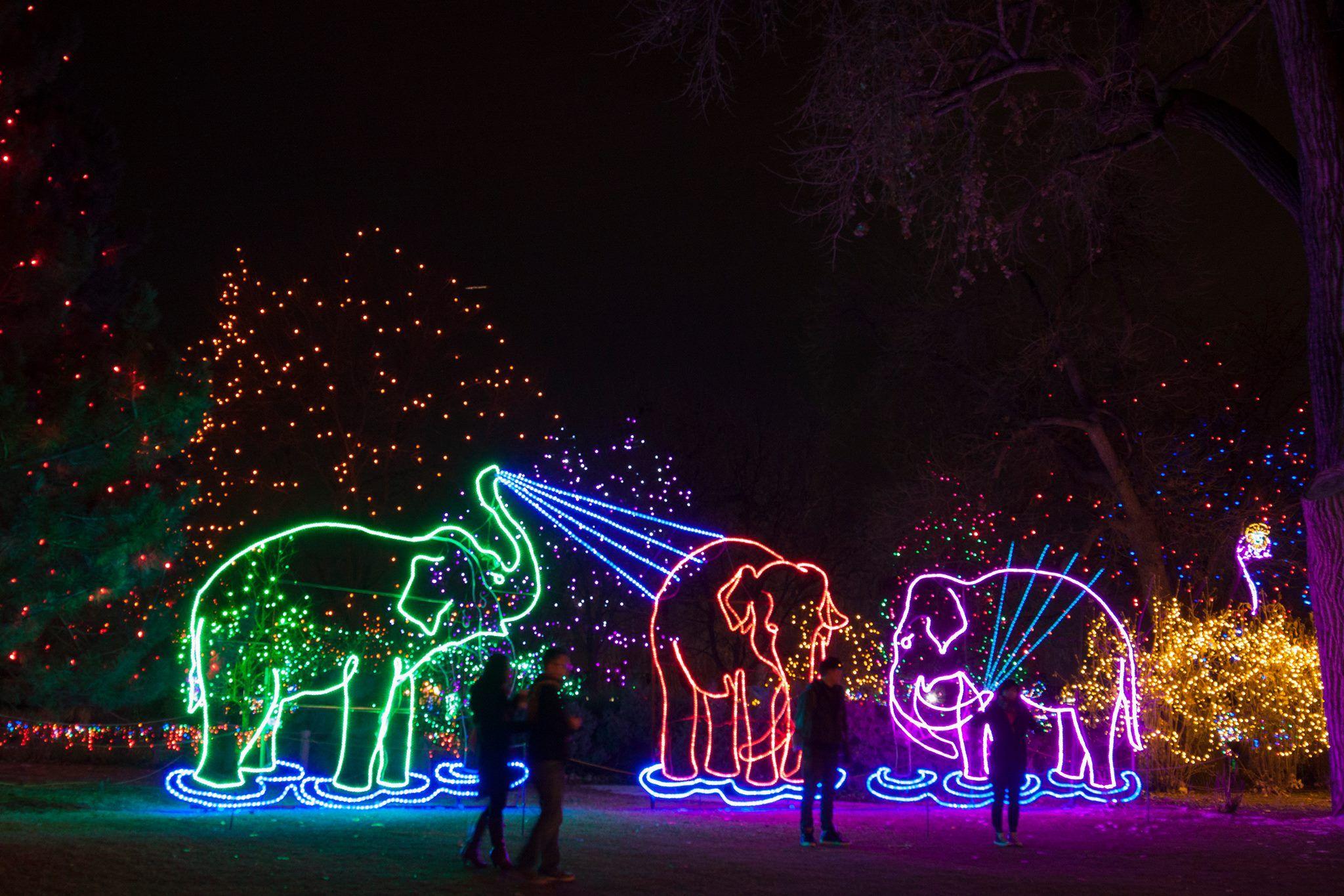 Best 25+ Zoo Lights Tickets Ideas On Pinterest | Cincinnati Festivals,  Cincinatti Ohio And Cincinnati