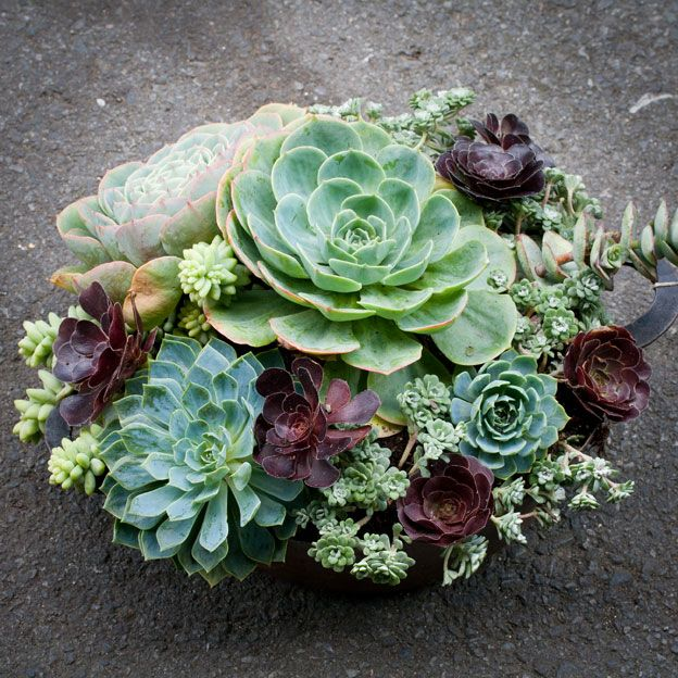 Outdoor Table Centerpiece. Succulents ~ Sooooo Beautiful! Succulent  Arrangements Are Popular Right Now.