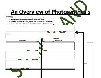Photosynthesis Reactants And Products Chart