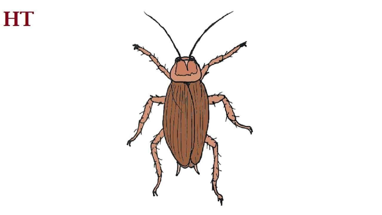 Sketch Cockroach Drawing