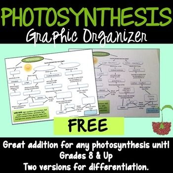 Free Photosynthesis Graphic Organizer Science For