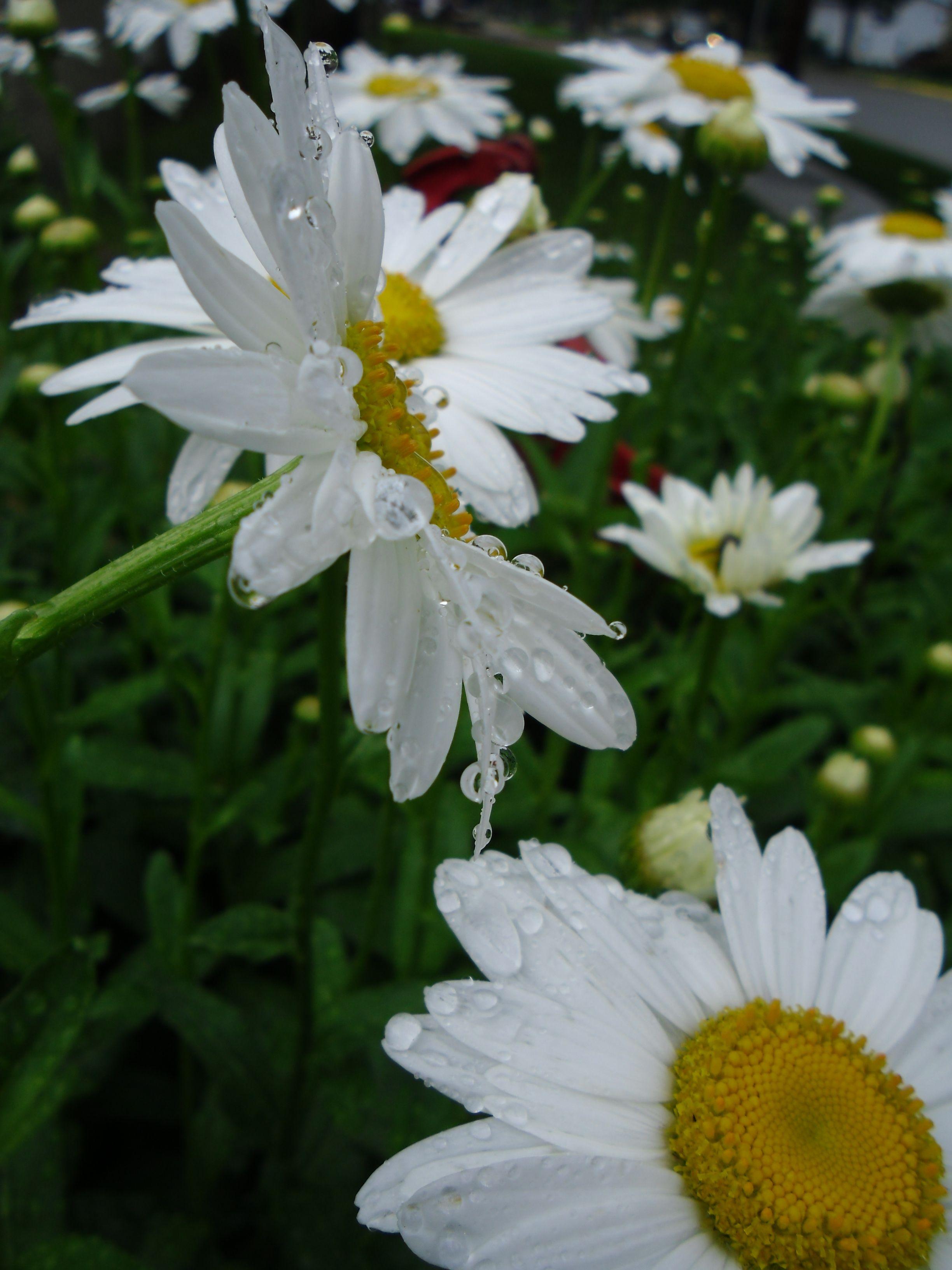 Drop's on flowers