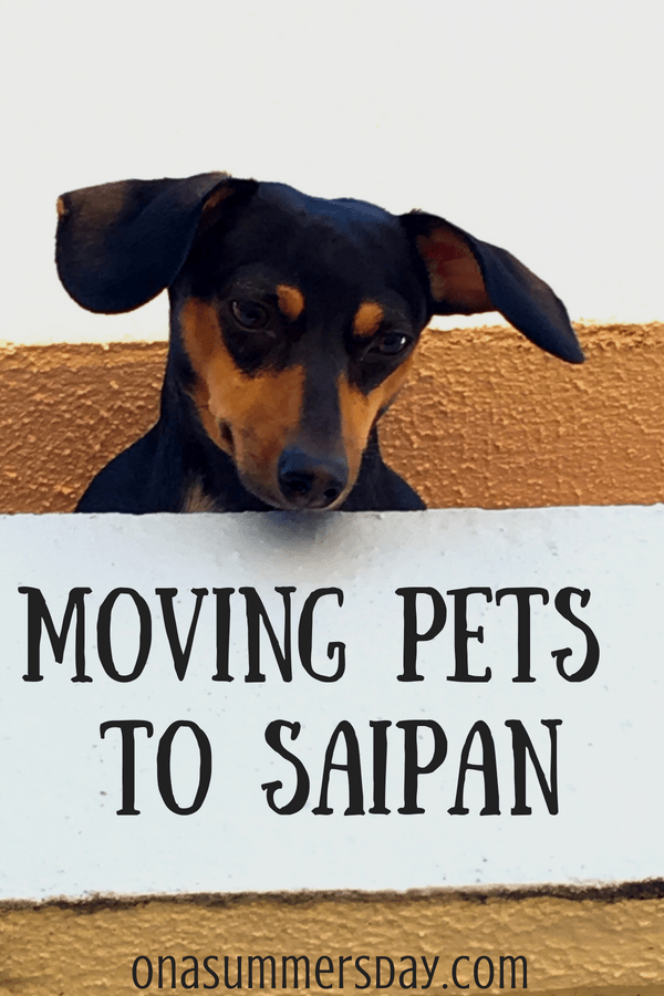 Moving Pets To Saipan How To Avoid Quarantine Islands