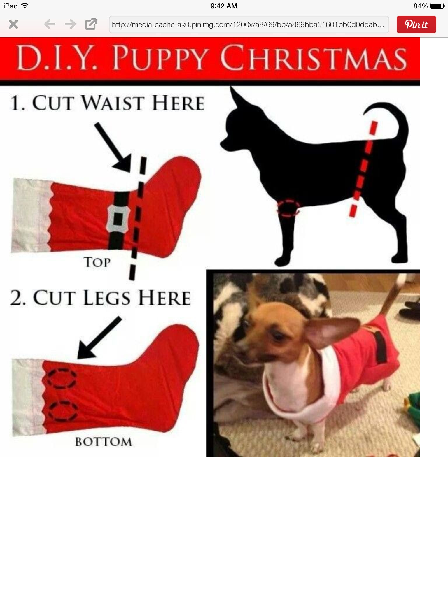 Diy Santa Outfit Christmas Dog Outfits Puppy Christmas Outfits