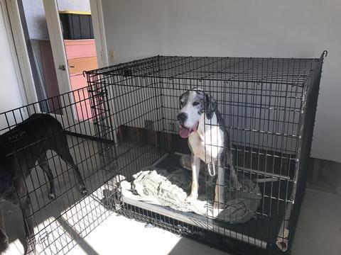 Kuranda Dog Bed Review Kuranda Dog Beds Xxl Dog Crate Dog Bed