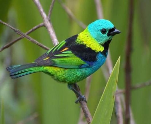 Imagenes De Aves Bonitas Para Fondo Celular