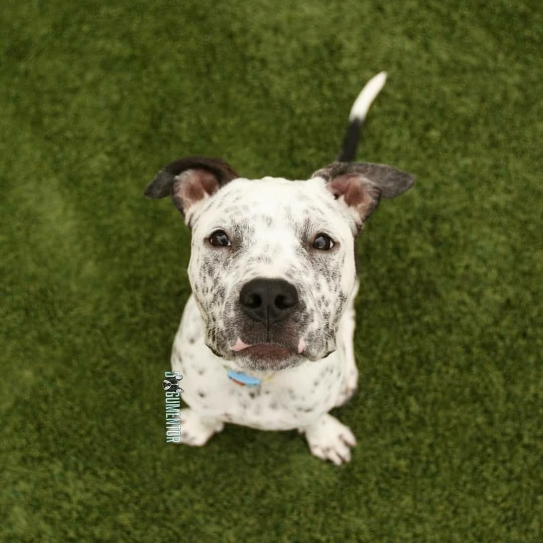 Dogs And Puppies For Adoption In San Diego With Images Puppy