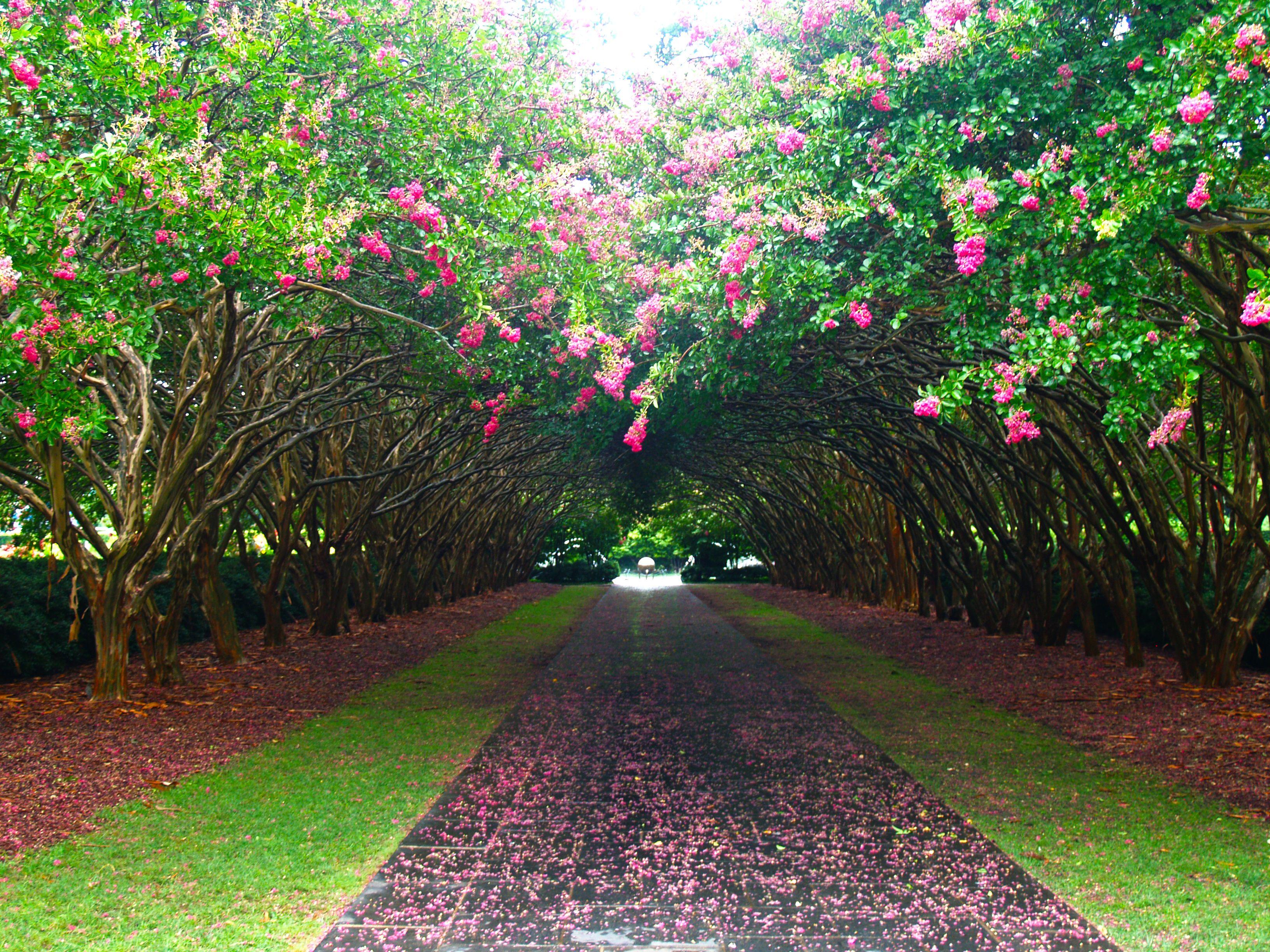 summer, the dallas arboretum, arboretum, garden, blooms, dallas