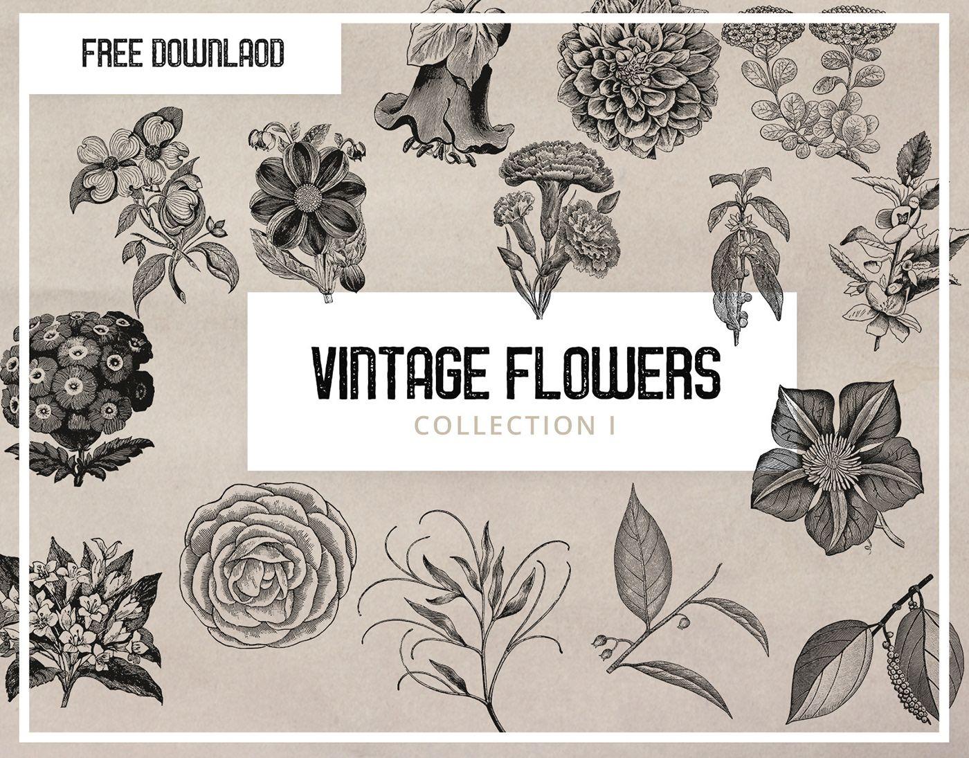 Free Vintage Flower Graphics Pixel Surplus Resources For Designers Vintage Graphics Free Flower Graphic Flower Illustration