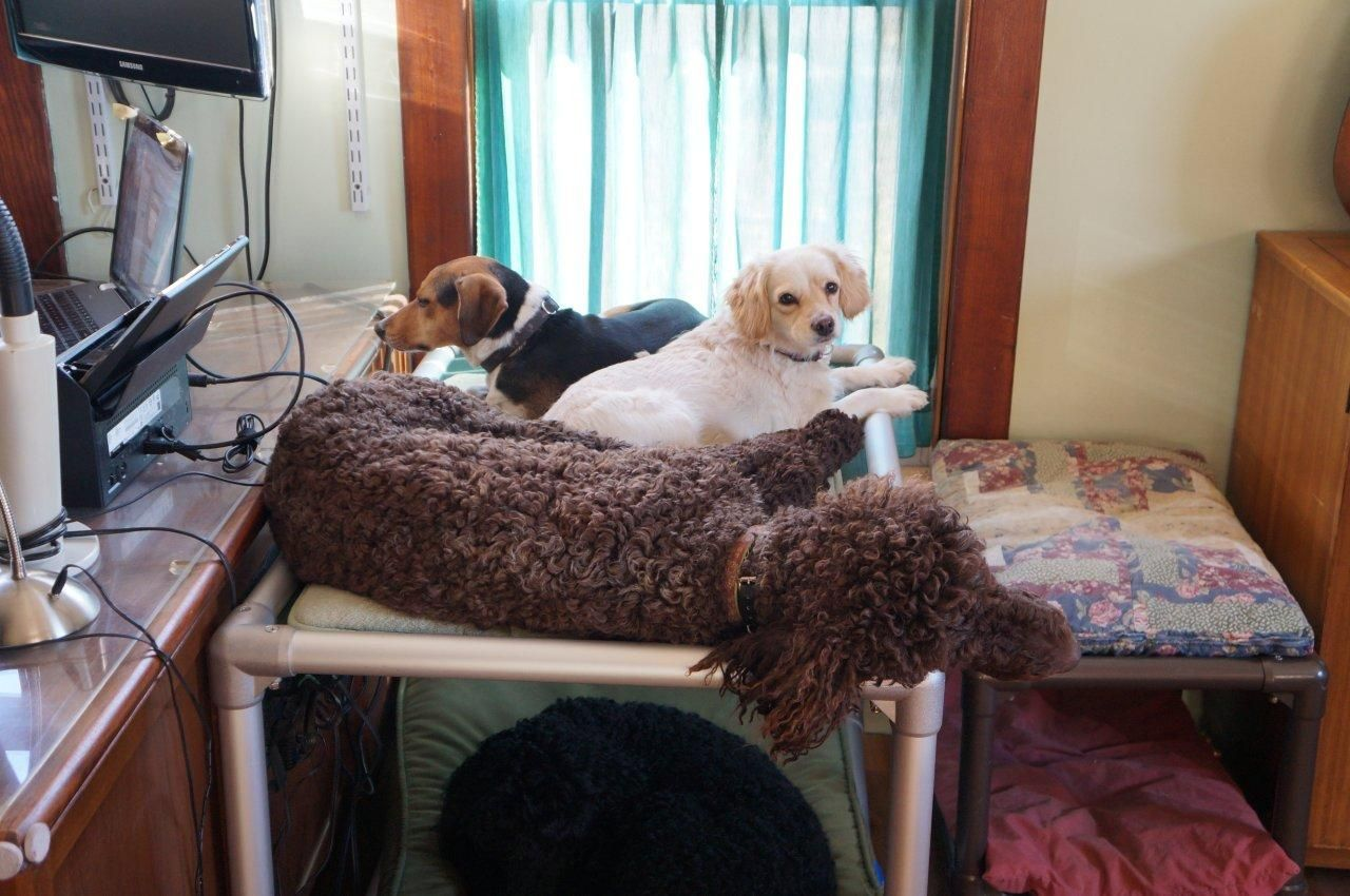 Caught watching TV again! Dog bunk beds, Bunk beds, Dog bed