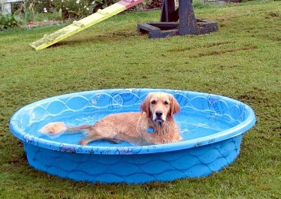 Hard plastic pools hard plastic kiddie pool with slide for Piscine pour grand chien