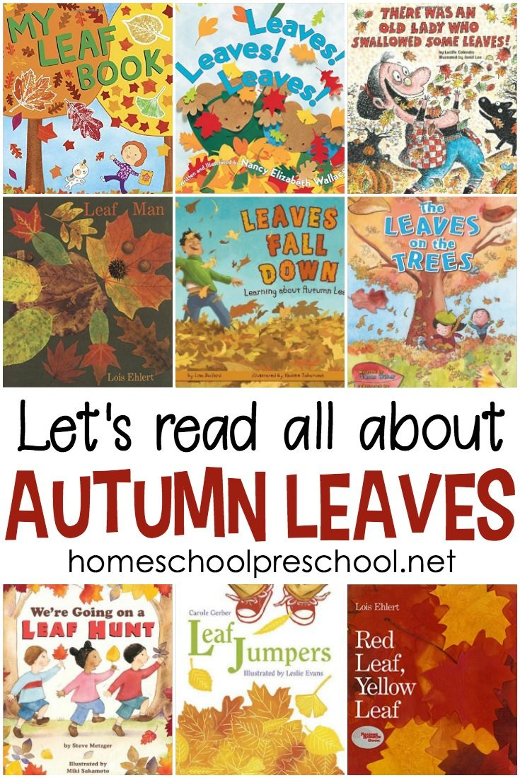 20+ of the Best Picture Books About Leaves for Preschool