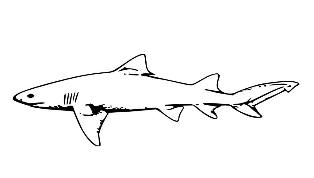 Free Printable Shark Coloring Pages For Kids | Pinterest | Shark and ...