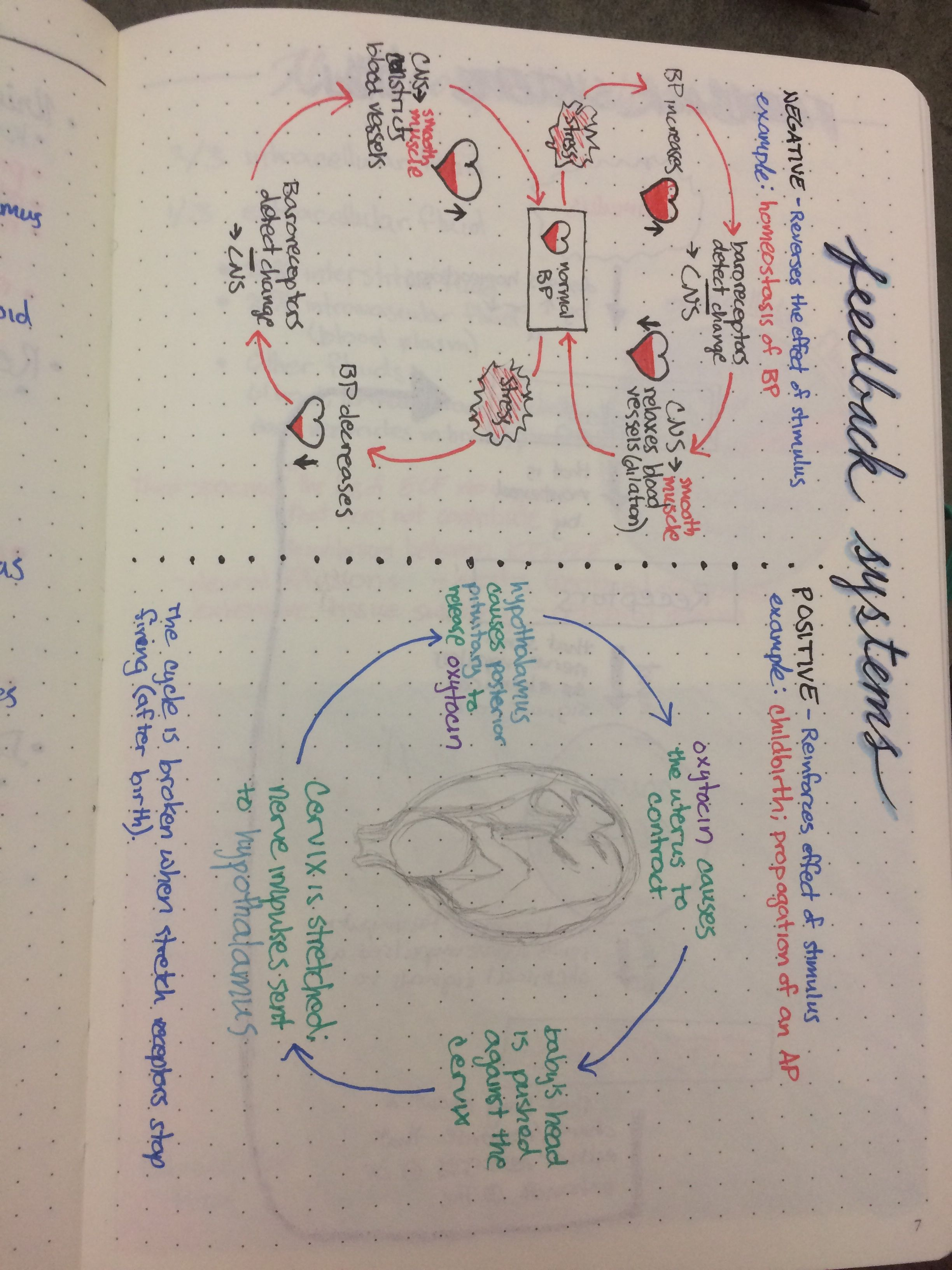 Examples Of Positive And Negative Feedback Systems Study Notebook