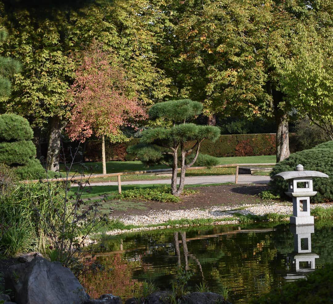 So Schnell Ist Das Wochenende Auch Schon Wieder Rum Ich War Heute Das Erste Mal Nach Einer Zweimonatigen Zwangspause Endli Japanischer Garten Garten Natur