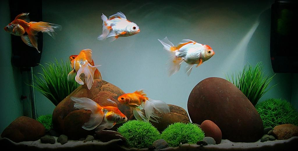I think i like this concept of large stones with a few for Aquarium goldfische