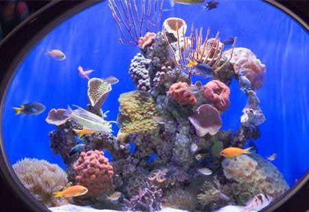 aquariums to visit  | Sea World | Western australia, Aquarium, Australia