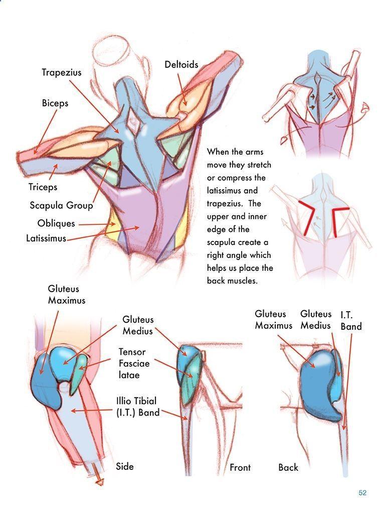 Pin on Anatomy reference & figure drawing에 대한 갤러리