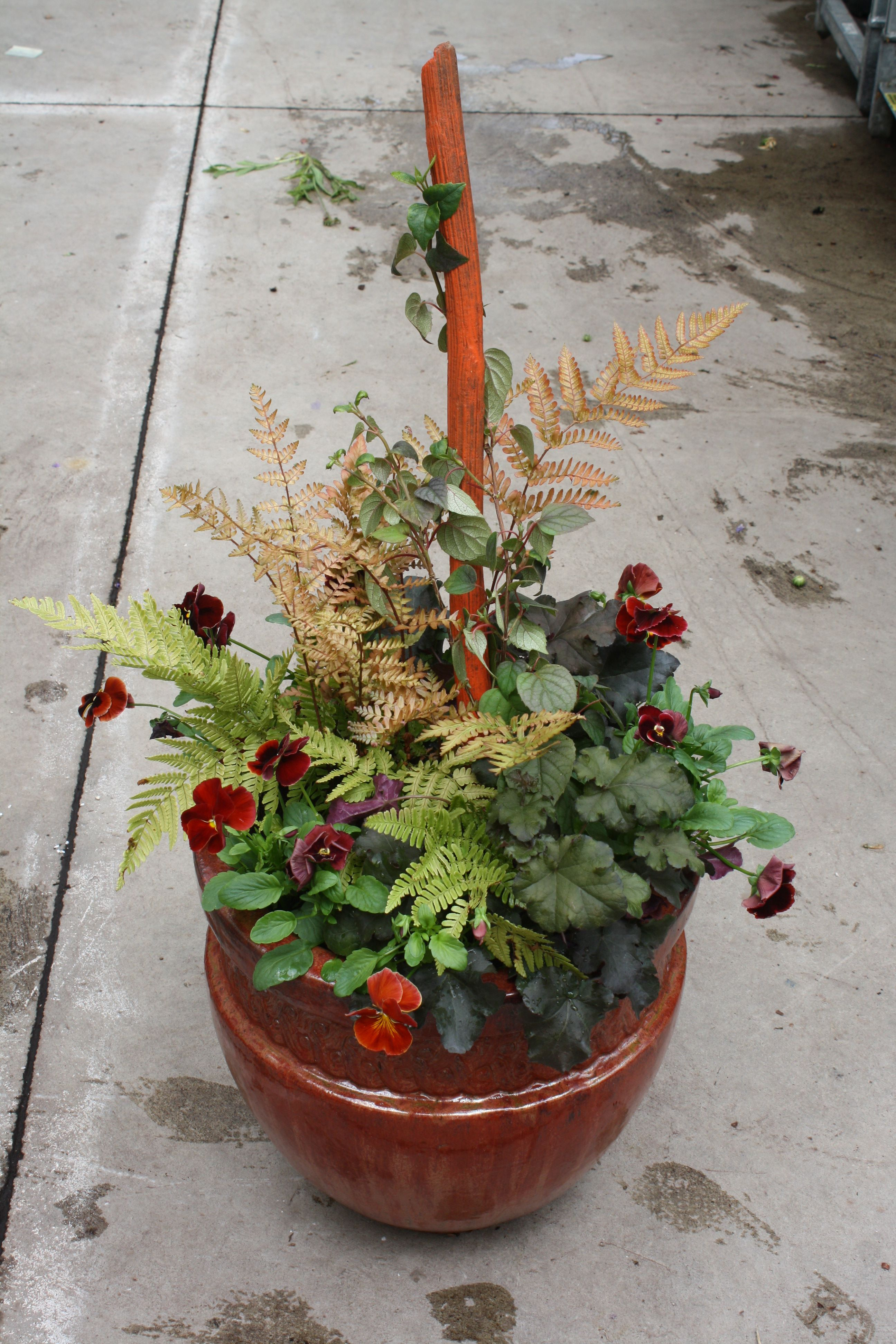 "colorful ""fall"" container we planted up to photograph for"