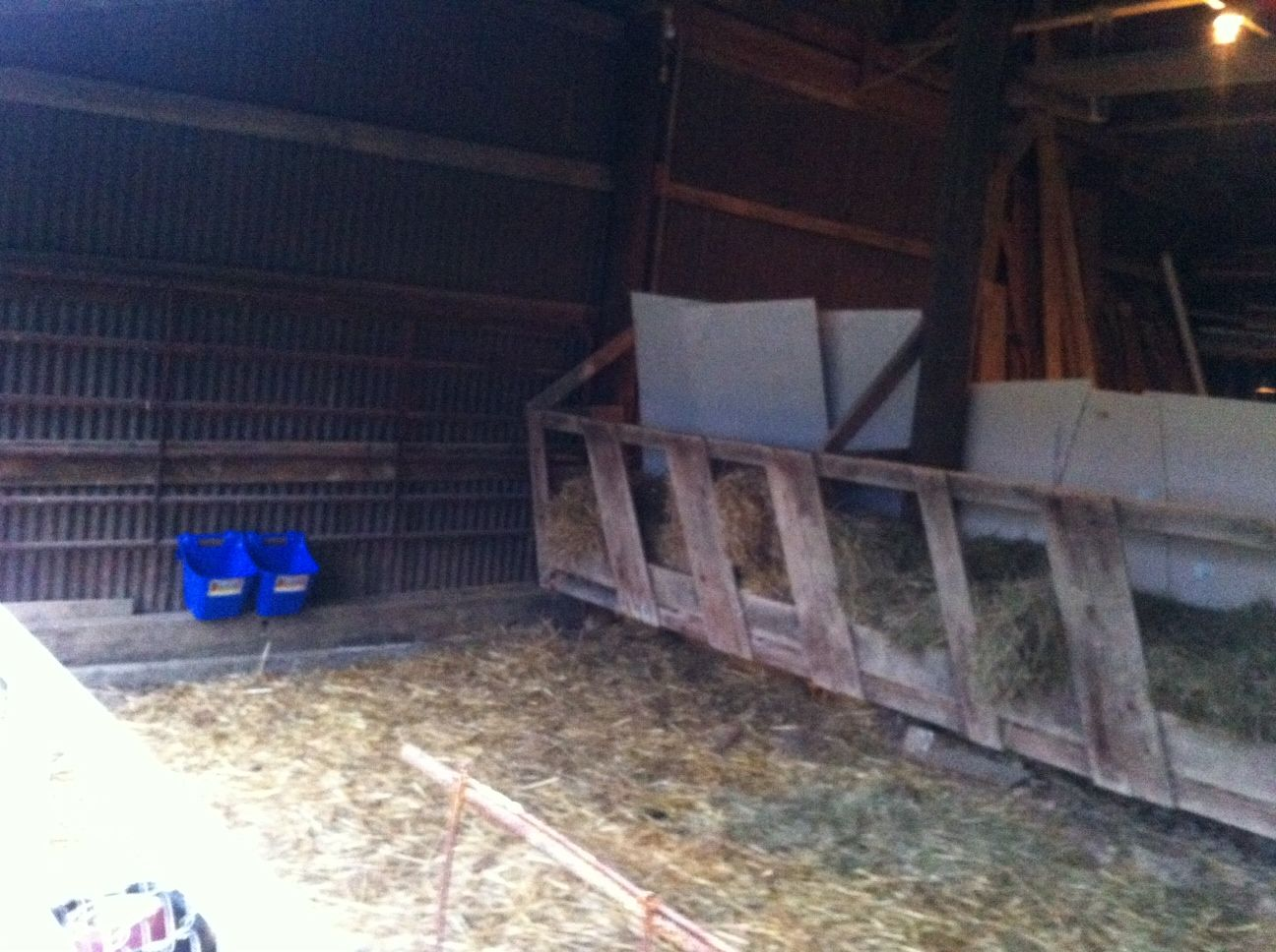 Inside The Temporary Goat Barn Blue Hook Over Grain And Mineral Feeders Straw Hay Feeder Along Wall AKA Escape Route Hence Concrete Board