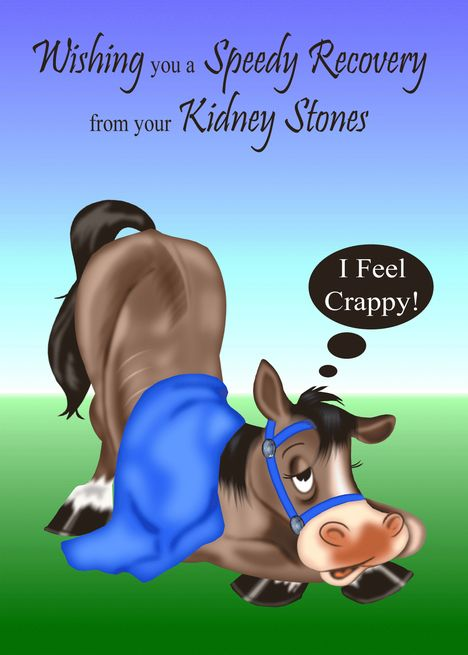 Get Well from Kidney Stones sick horse with blue blanket and bridle card