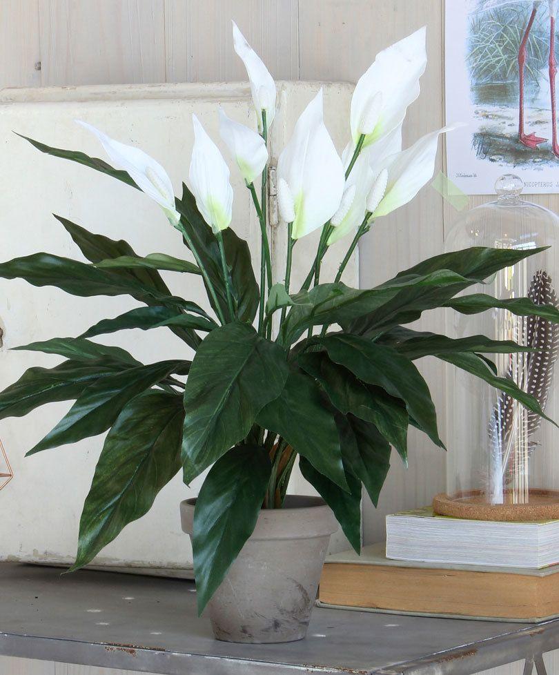 Piante Da Appartamento Ambiente Buio ecco le 12 piante di appartamento che sopravviverebbero