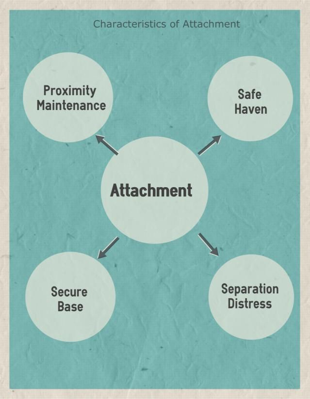 Evolutionary theory attachment essay