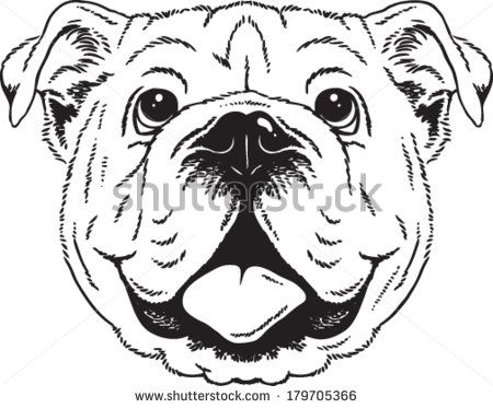 Black And White Vector Sketch Of An English Bulldog S Face