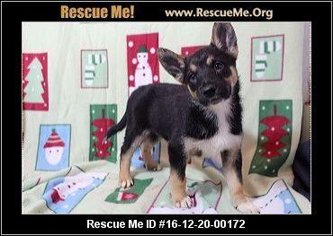 Minnesota German Shepherd Rescue Adoptions Rescueme Org