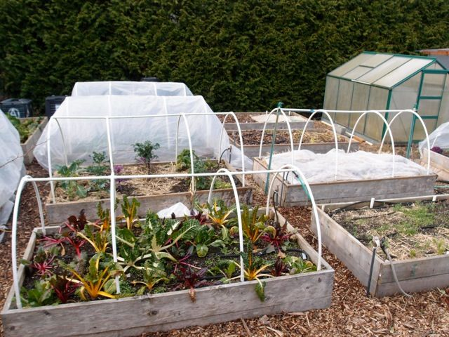 Tunnel Cloches With Images Raised Garden Beds Garden Cloche