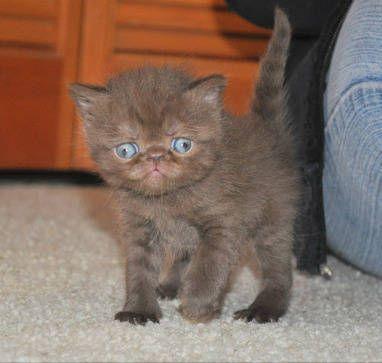 Uh Grumpy Cat Meet Drunky Cat Lol Montana Cats Kittens For
