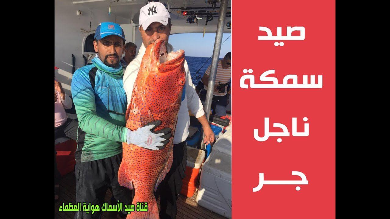 صيد سمكة ناجل في البحر الأحمر حماطة Fish Hunting Trolling Baseball Cards Youtube Baseball