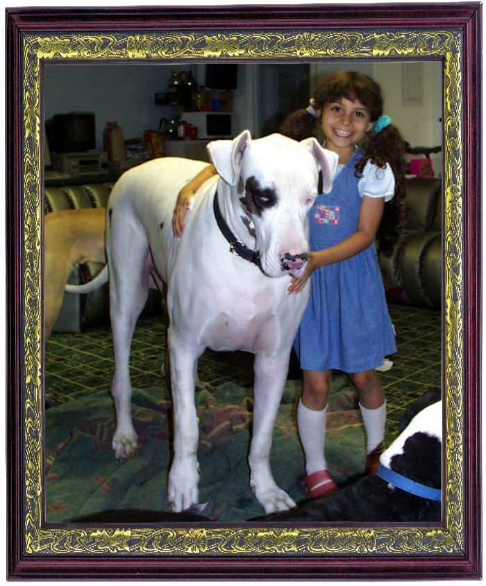 Avalanche The Greatest Dane This Guy Lived At The Great Dane
