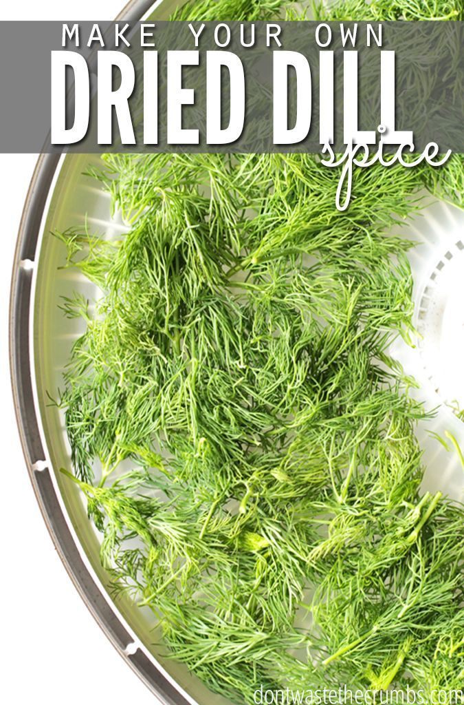 How To Dehydrate Dill Dehydrator Recipes Dehydrated