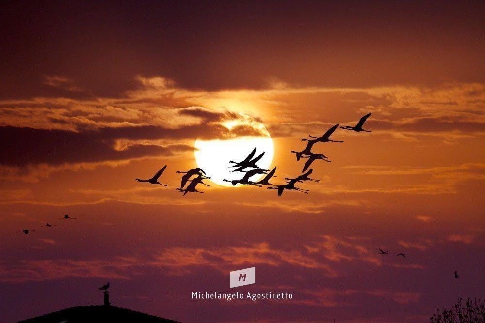 Flamingo Silhouettes / Silhouette di Fenicotteri