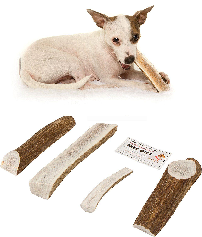 Split Elk Antlers For Dogs Grade A Premium Dog Antler Chews All