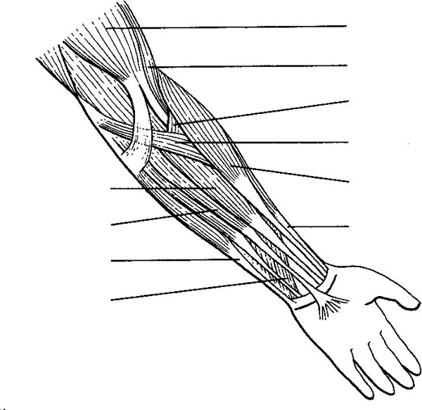 - Human Anatomy Arm Coloring Pages : Bulk Color In 2020 Anatomy Coloring  Book, Anatomy, Coloring Pages