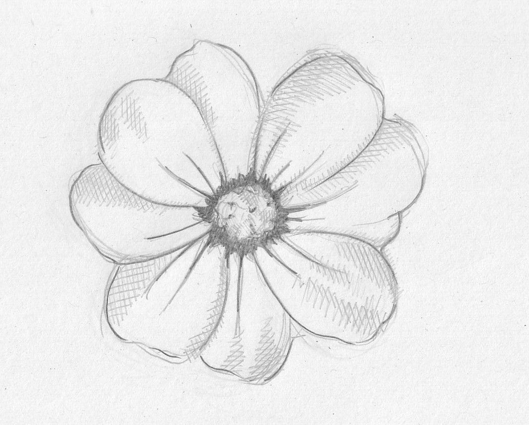 1064x855 Simple Pencil Drawings For Flower Realistic Flower Drawing Flower Sketches Cute Flower Drawing