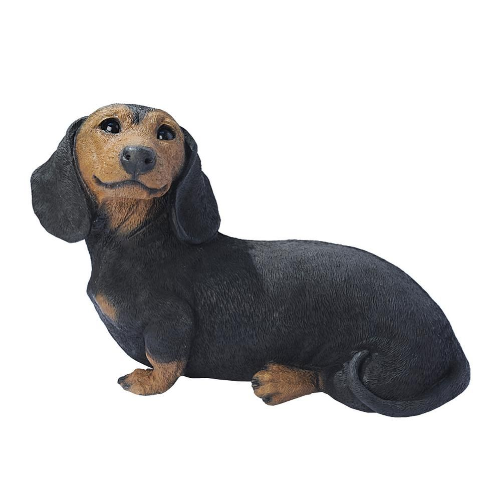 Dudley Miniature Dachshund Puppy Youtube Video Dachshund