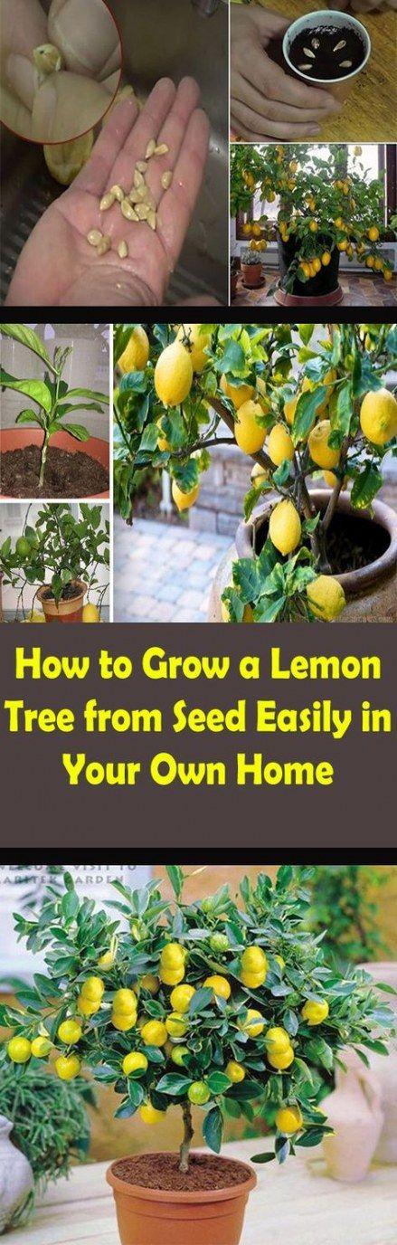 23+ Ideas yard trees how to grow yard Fruit garden