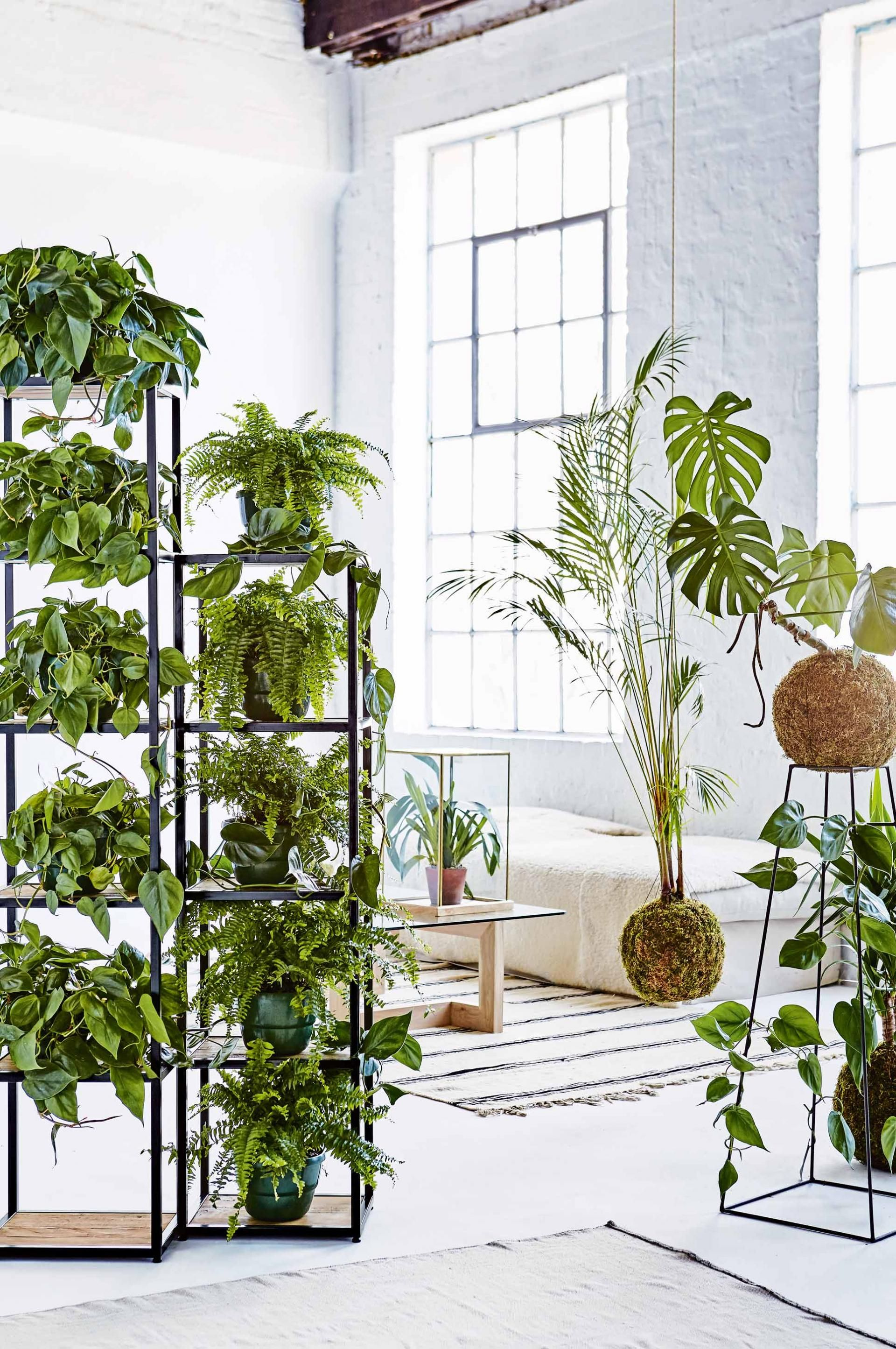 10 unforgettable ideas for styling indoor plants for Indoor plant ideas