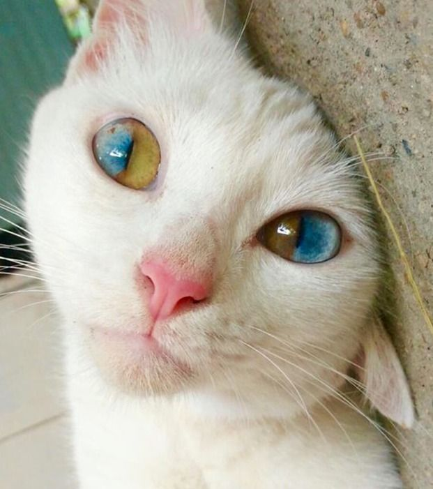 Diese Augen sind hypnotisierend