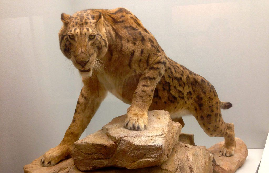 how to become an exotic animal specialist