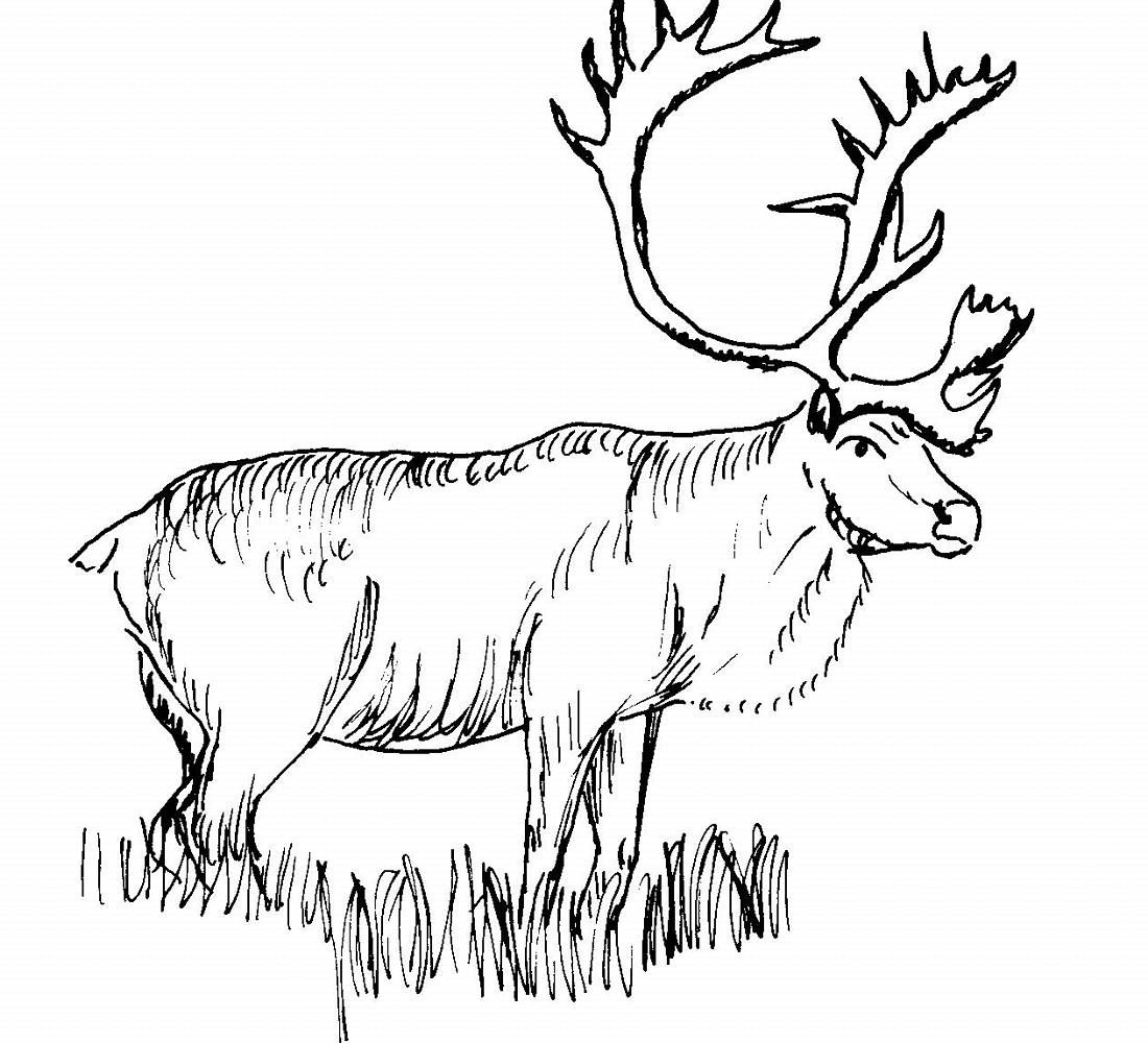 Elk Coloring Pages Best Coloring Pages For Kids Coloring Pictures Of Animals Animal Coloring Books Animal Coloring Pages