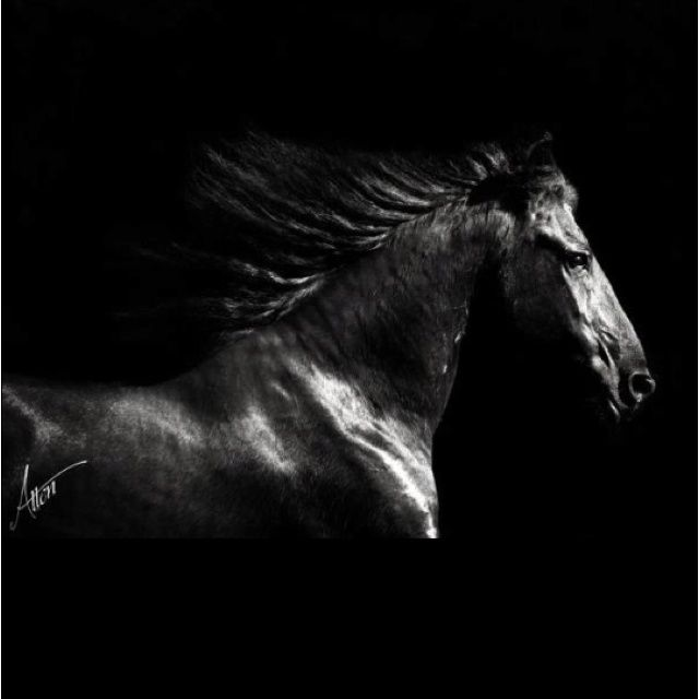 Brand-new horse photography - Google Search | TINA 's STUFF 5 | Pinterest  QI33
