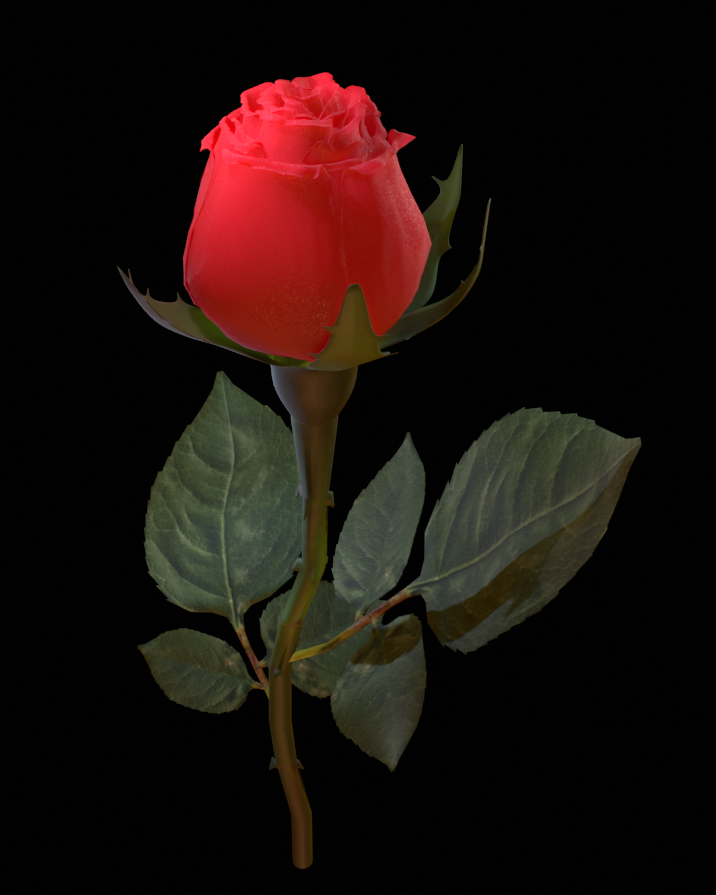 Realistic 3d Rose Flower With Blooming Rig Rose Flower Flowers Bloom